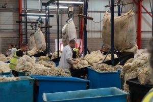 A wool grader sorting the fleece